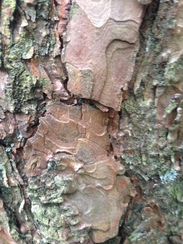 Oh hello tree... arse